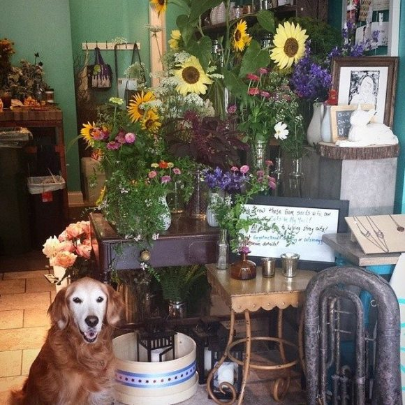 Maddie in the flowers shop