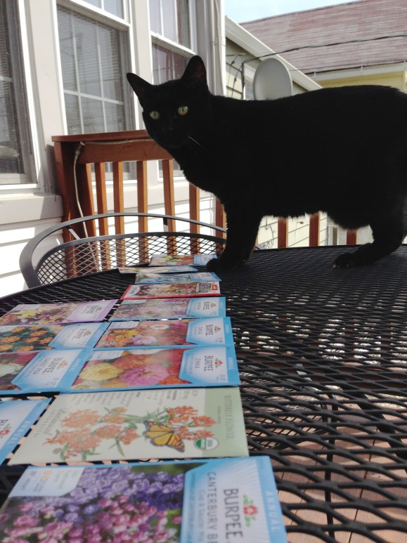 Mooha and the seed packets