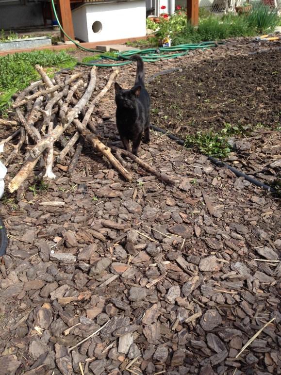 Mooha and the sticks