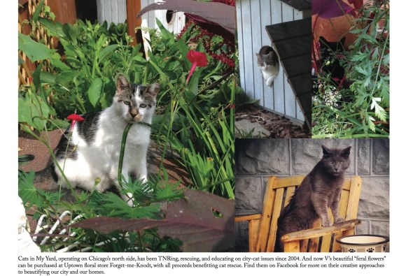 cats in my yard page