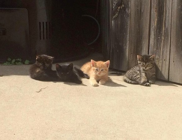 backyardcats