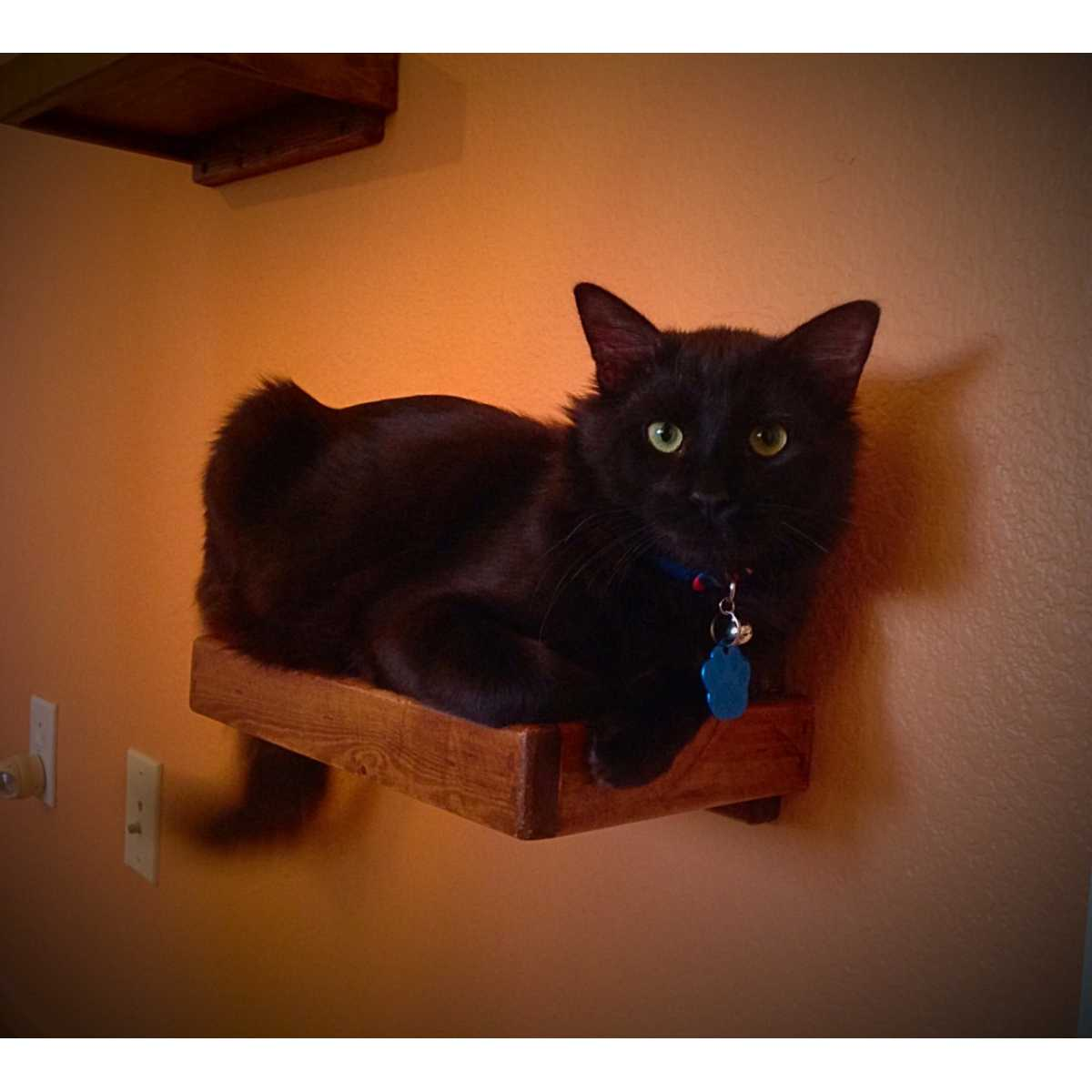 Artisan Made 4 Floating Cat Wall Shelves 1 Floating Cat Wall Bed CatsPlay Superstore