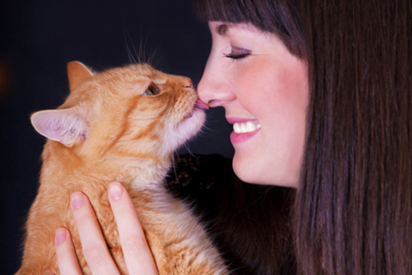 An orange tabby cat licking a human on the nose.