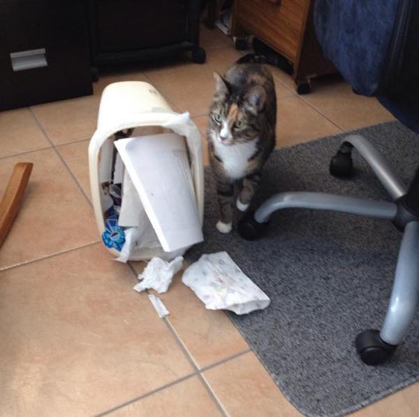 Cat Can T Quit Intimate But Dangerous Love Affair With Hoover