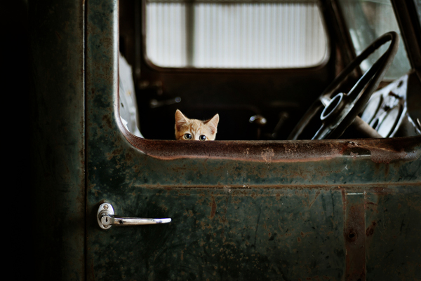 Image result for kittens and trucks