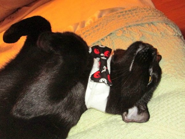 A happy black cat wearing a bow tie.
