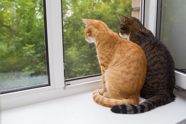 https://i1.wp.com/www.catster.com/wp-content/uploads/2015/06/Two-cats-sitting-on-the-window-sill-shutterstock_197509574.jpg