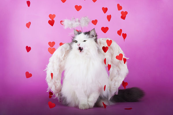 We Make Fun Of Valentines Day Cats In Stock Photos Catster