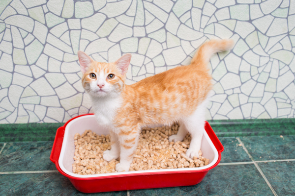 An orange tabby cat in a litter box.