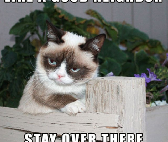 Like A Good Neighbor Stay Over There Meme Posted By Realgrumpycat Grumpy Cat