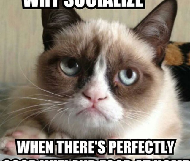 Why Socialize Meme Posted By Bestgrumpycatmeh