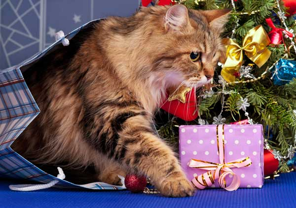 A cat with a gift.