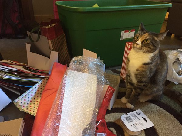 A cat among holiday gift-wrapping supplies.