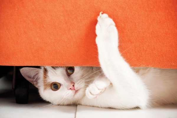 Living With Cats In Apartments How To Make It Work In A