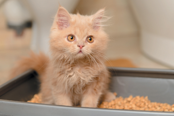 A kitten looking surprised or confused in the litter box.