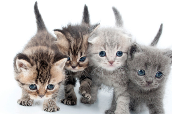 A group of kittens.