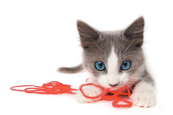 A gray and white kitten with string.