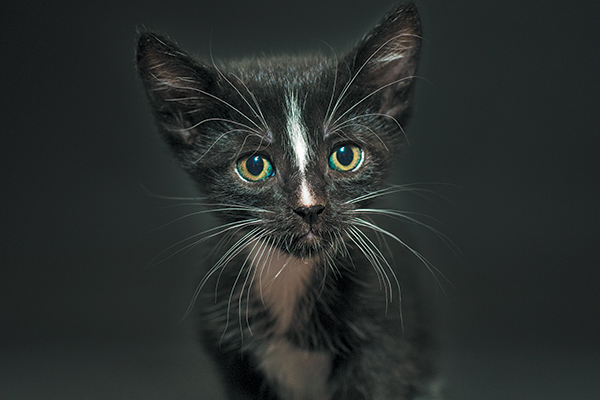 Black Cat Awareness Month - Spike. Photography by Casey Elise Christopher.