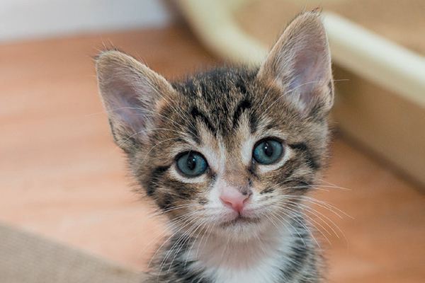 A tabby cat with an M marking on his forehead.