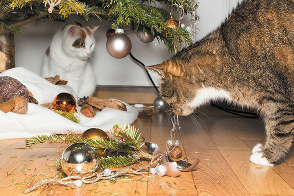 Two cats with broken Christmas ornaments.