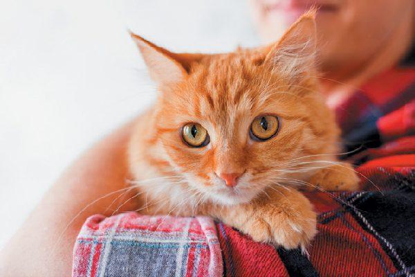 Un gato mirando por encima del hombro de un humano.