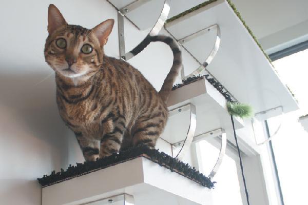 Cat on a cat shelf.