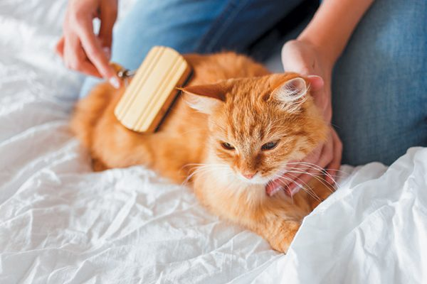 Help groom your senior cat where they can't reach. Photography by ©Aksenovko | Getty Images.