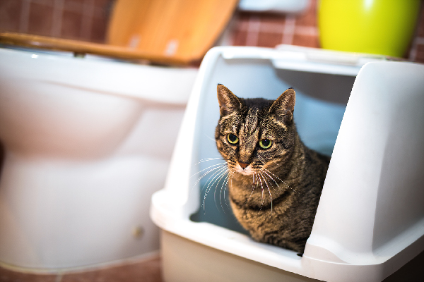 A cat in a litter box in a bathroom.
