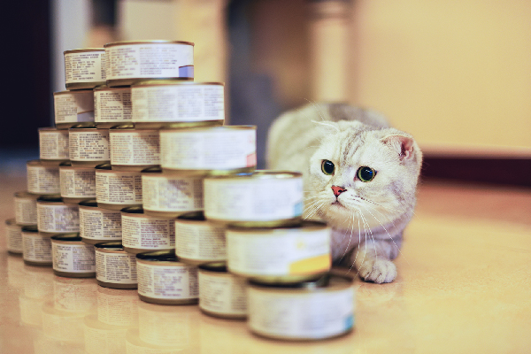 A cat looking at stacked cans of wet cat food or tuna.