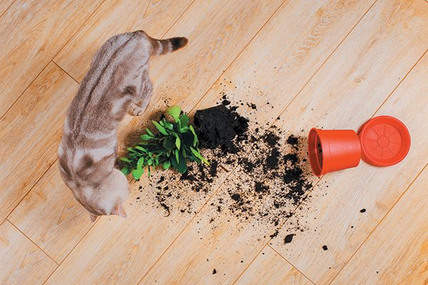 It's common for cats to play with their prey, but considered a weird cat behavior when they 're knocking things to the floor. Photography ©Aleksandr_Kulikov | Getty Images.