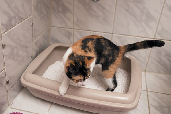 Here are some great tips when learning how to litter train a kitten successfully. ©absolutimages | Getty Images.