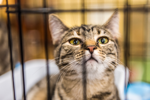 A cat in a cage at a shelter.