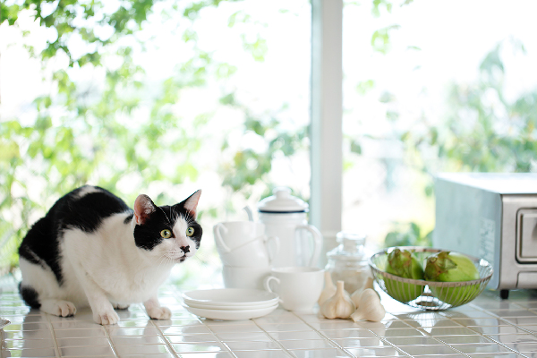 A cat next to garlic cloves on a kitchen counter.