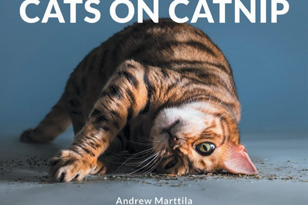 Cats on Catnip by Andrew Marttila.