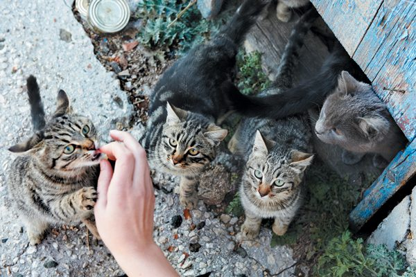 Trap-neuter-return improves the lives of feral cats and their relationship with the community. Photography ©Dovapi | Getty Images.