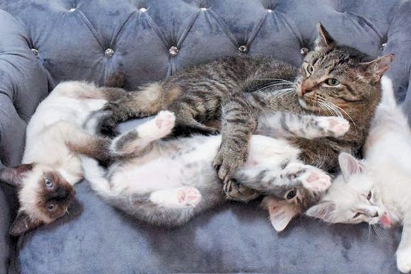 Grandpa Mason snuggling with some of his kitten charges. Photography Courtesy TinyKittens.com.