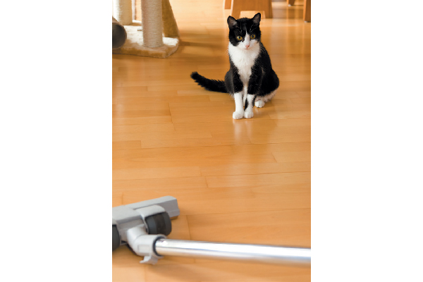 A cat staring at a vacuum.