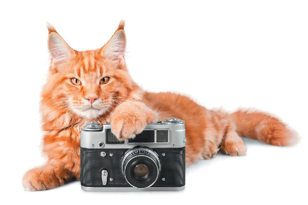 Orange tabby cat with a camera.