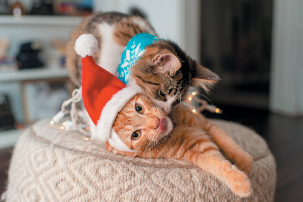 Two cats taking holiday photos.