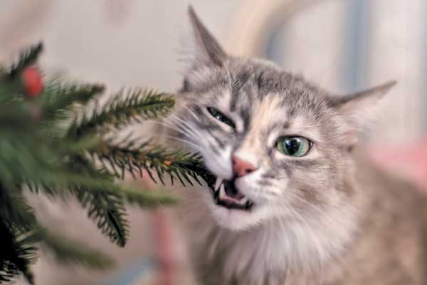 Even though an artificial tree isn't toxic, it can still cause irritation if tree pieces are ingested. Photography ©-oxygen-| Getty Images.