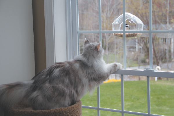 A cat looking out the window at a bird feeder.