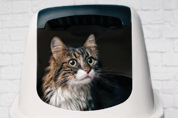 Cómo encontrar arena adecuada para tu gato
