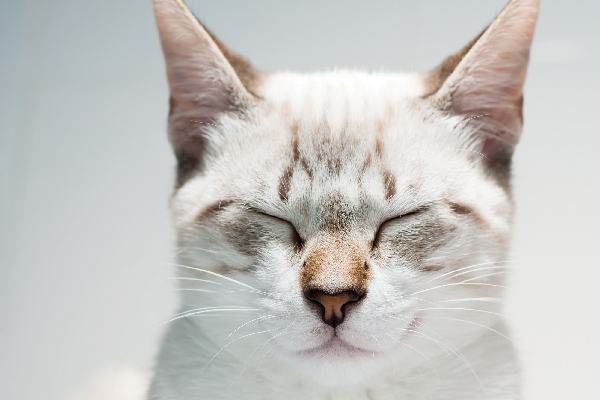 A white and gray cat with his eyes closed.