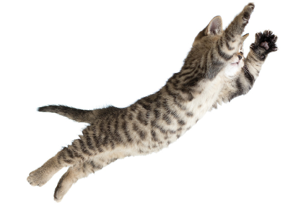 Cat flying or jumping through the air.