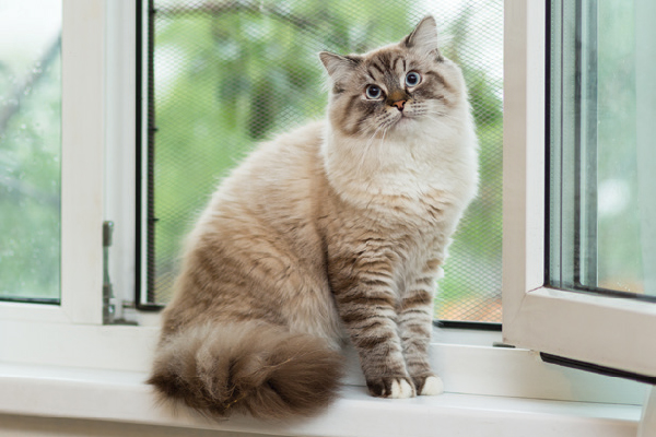 A cat looking surprised or confused by a window.