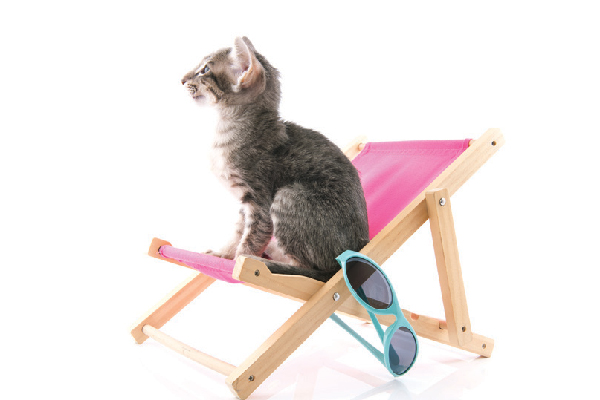 A cat on a summery beach chair.