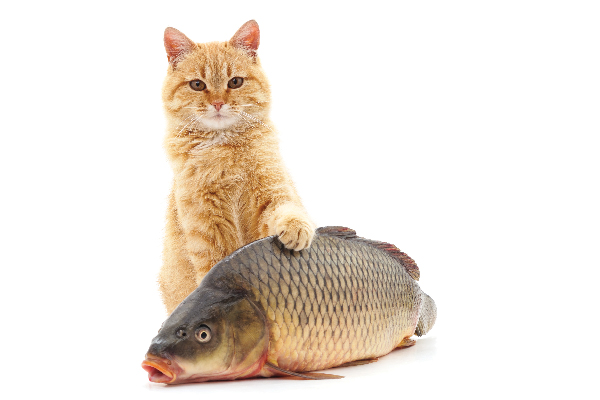 A ginger tabby cat with a fish.