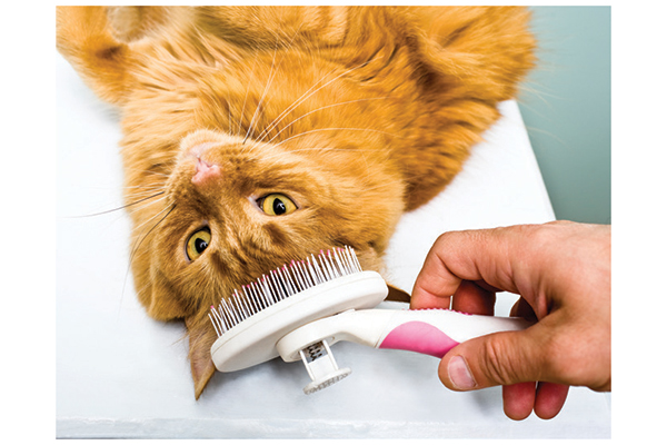 Cat being groomed. Photography by: ©michellegibson | Getty Images