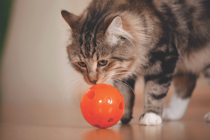 help your cat lose weight