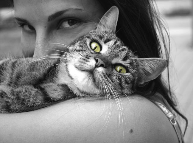 Cat hotel opens in Marbella : Costa del Sol Pets